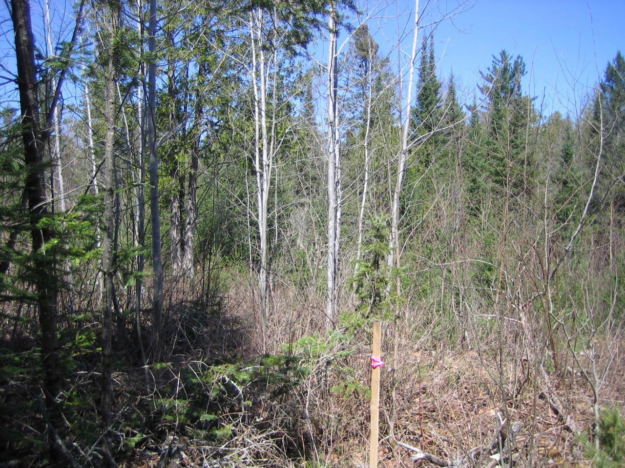 View Vacant Land For Sale at 19.6 Acres Wontor Rd, Amberg, WI