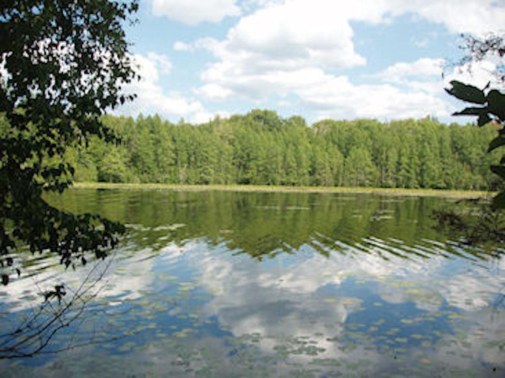 View Vacant Land For Sale at On Chickadee Tr E, Park Falls, WI