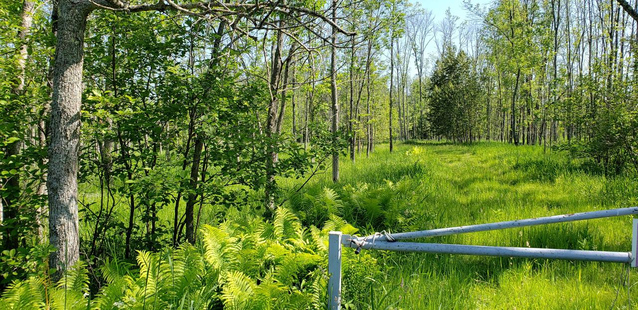 View Vacant Land For Sale at 20 Acres Birch Creek Rd, INGALLSTON, MI