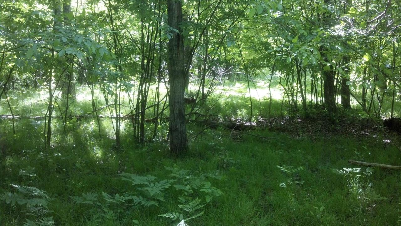View Vacant Land For Sale at Lt  33 Kloppman St, Crivitz, WI