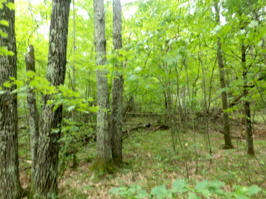 View Vacant Land For Sale at Lt 2 Parkway Rd, Silver Cliff, WI