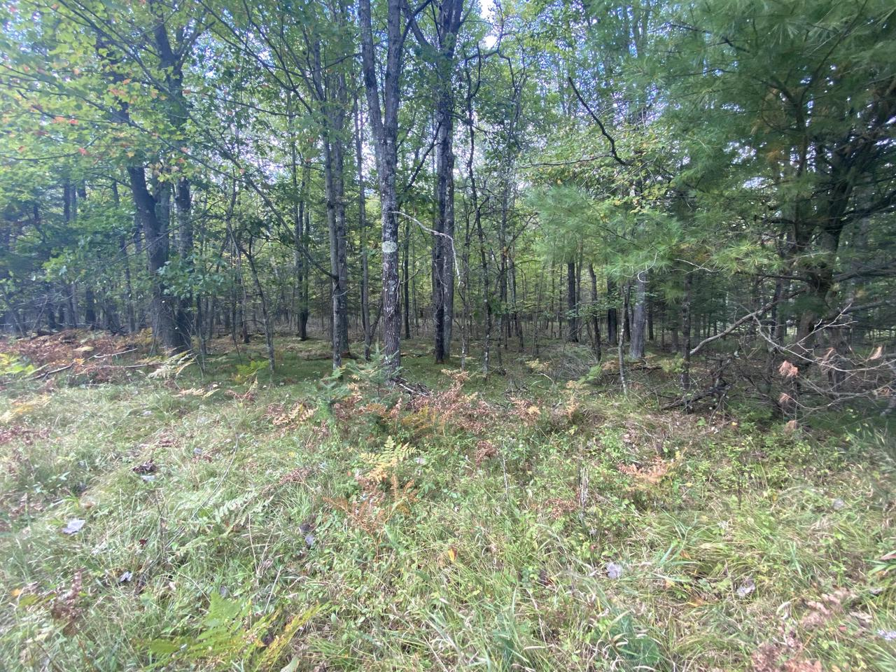 View Vacant Land For Sale at N11605 River Rd, Wausaukee, WI