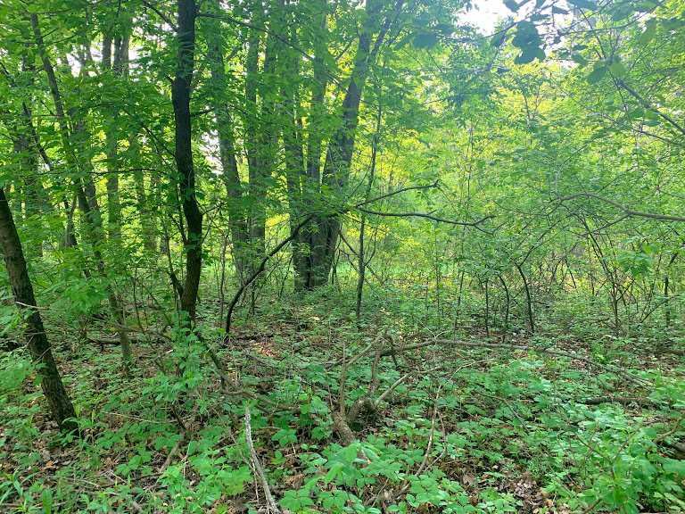 Build your dream home on this beautiful wooded city 1 acre lot on the west side of town. Tucked away for privacy on a dead end street this property has all utilities and a secluded feeling. Incredible location close to downtown, schools, hospital & parks. All the amenities including natural gas, high speed internet, and municipal water and sewer! Property is being sold under accessed value. Come see it today before it's gone!