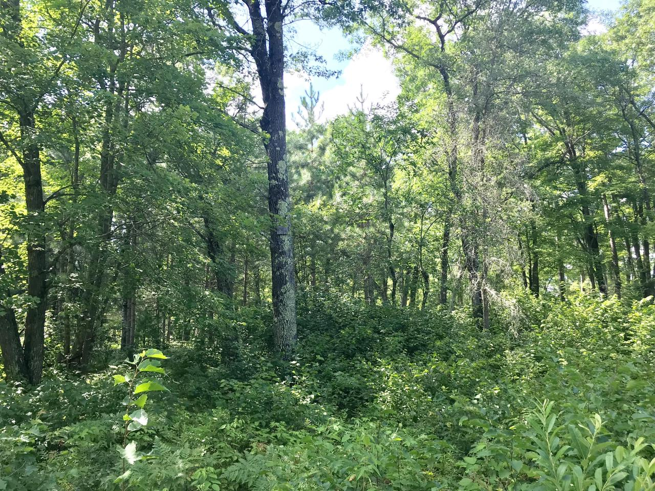 Wooded lot in the heart of the High Falls area. ATV trail access and close to public lands and numerous boat landings!**Also available with lot 3 for a total of 1.75 Acres for $20900